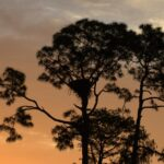Southwest Florida(SWFL) Eagle Cam