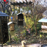 Live Bird Feeder Cams