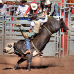 Live Rodeo Cam