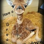 Cheyenne Mountain Zoo Giraffe Birth Cam