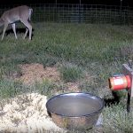 North Texas Deer & Critter Cams