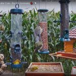 Recke Germany Bird Feeder Cam