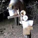 Critter Cams in Texas