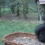 Czech Republic Wildlife Cams