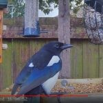 Bird Feeder Cams in the United Kingdom