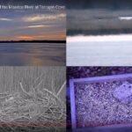 Terrapin Cove Cams