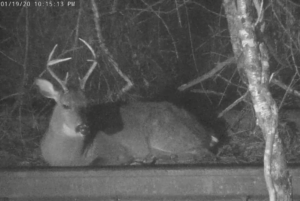 Screenshot_2020-01-20 Live Georgia Deer Cam SPO.png
