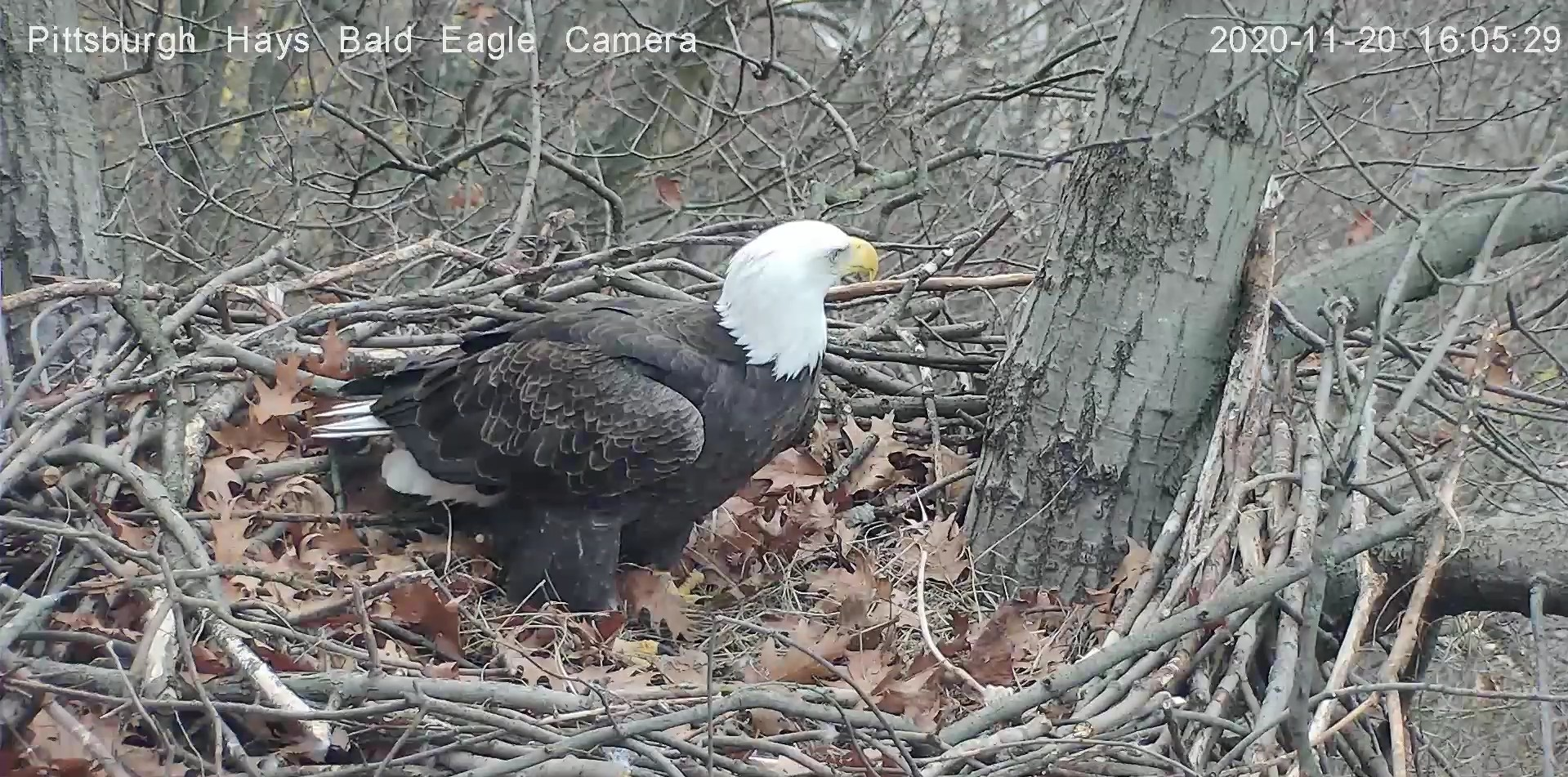 Hays Bald Eagle Camera